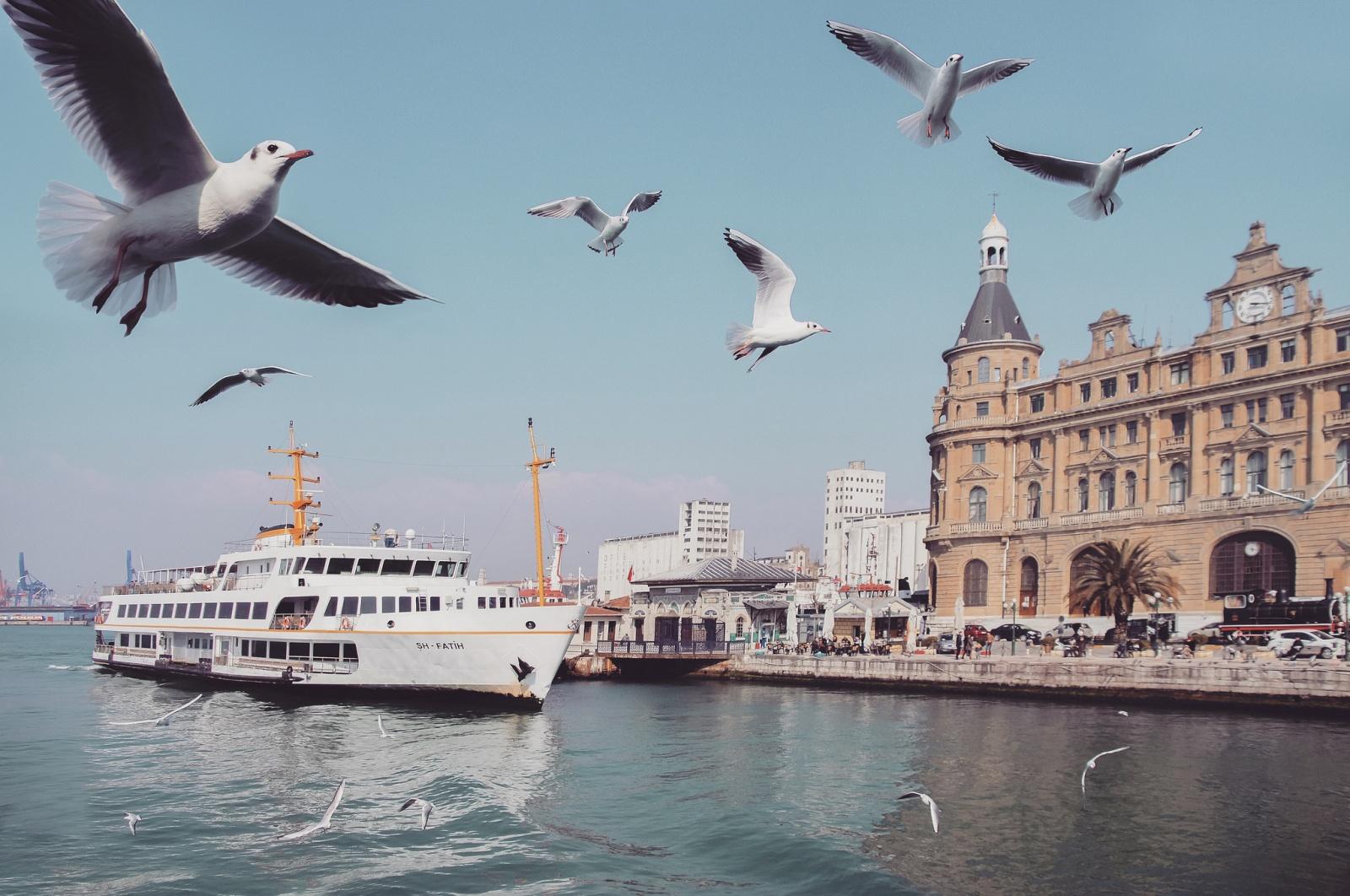 Istanbul Haydarpasa Kadiköy Seagulls