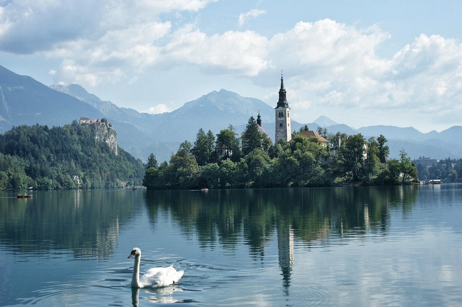 Bled lake Slovenia and the swan