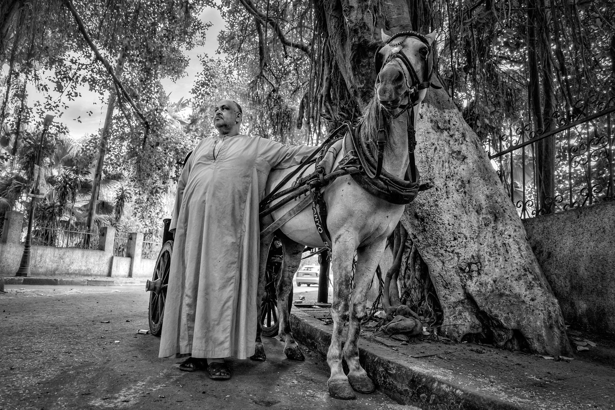 The horse and the coachman. Cairo, Egypt.