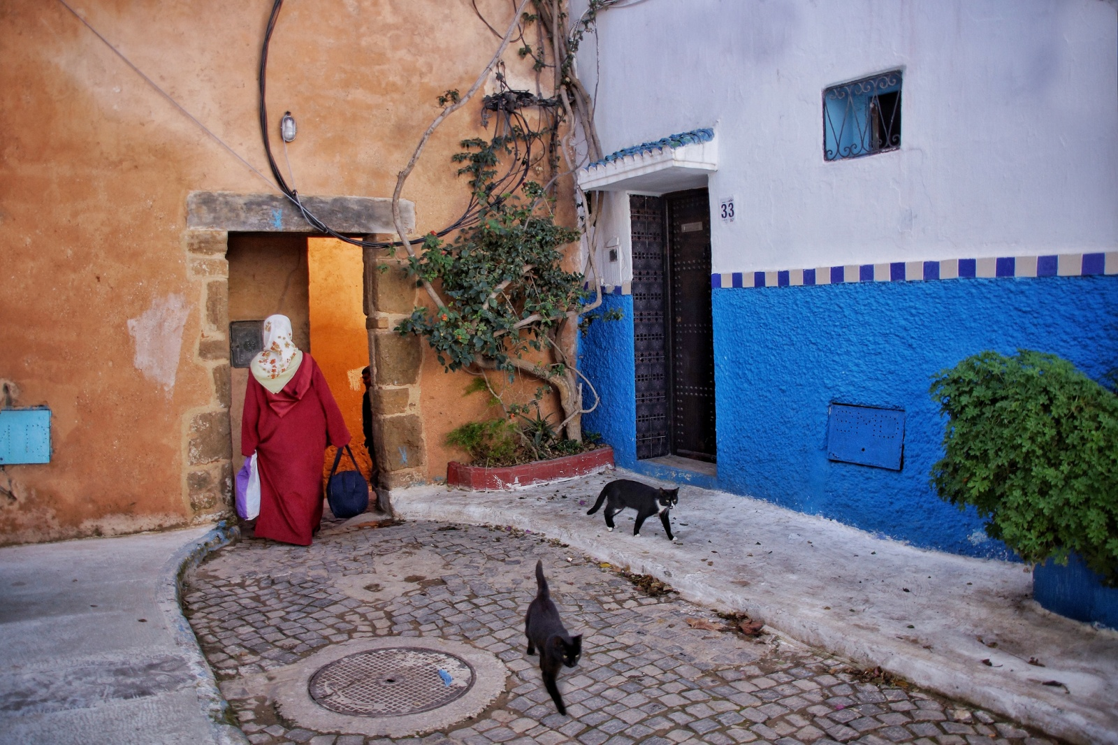 Rabat streetlife and cats