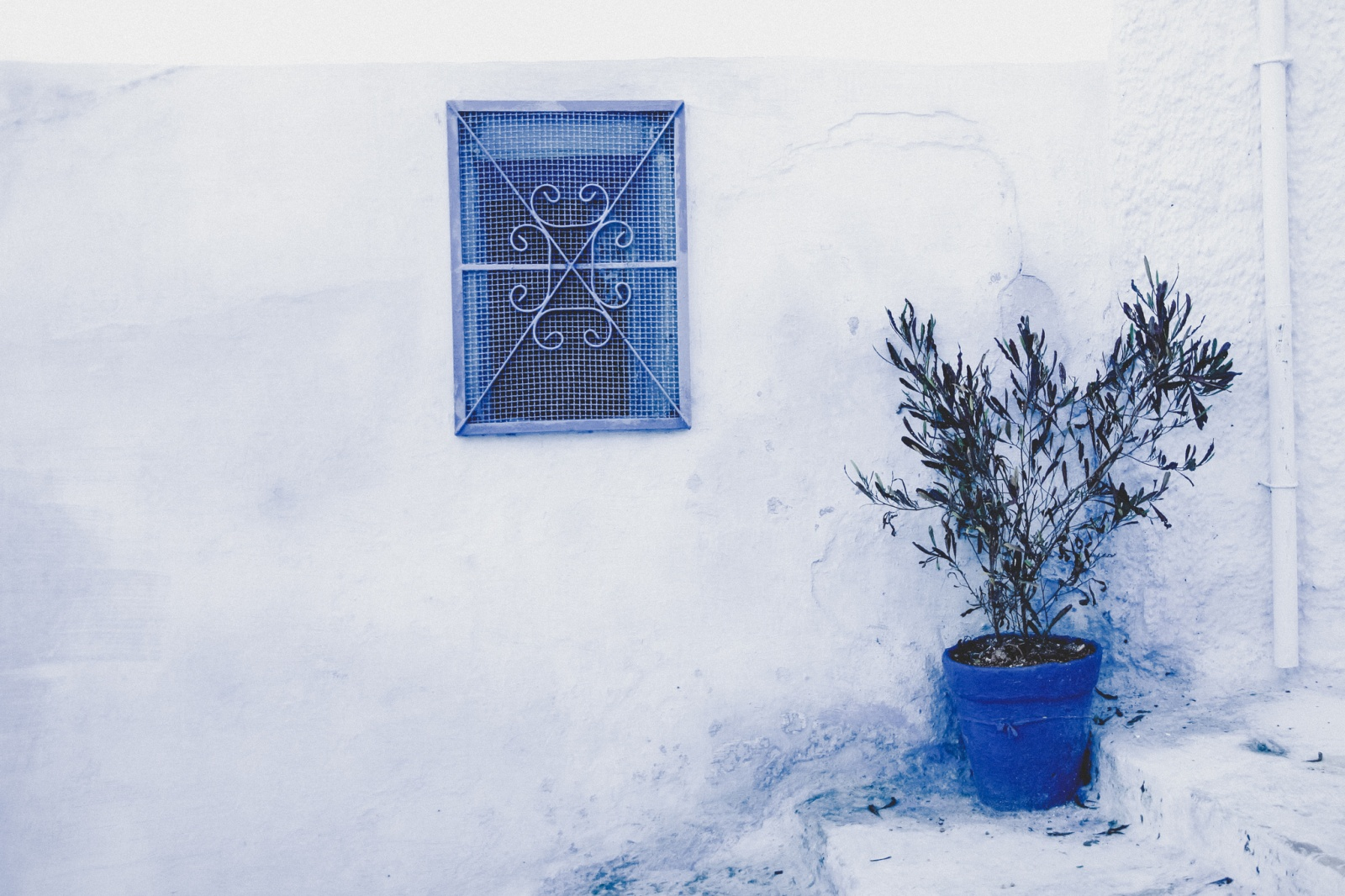 Blue window and the blue pot