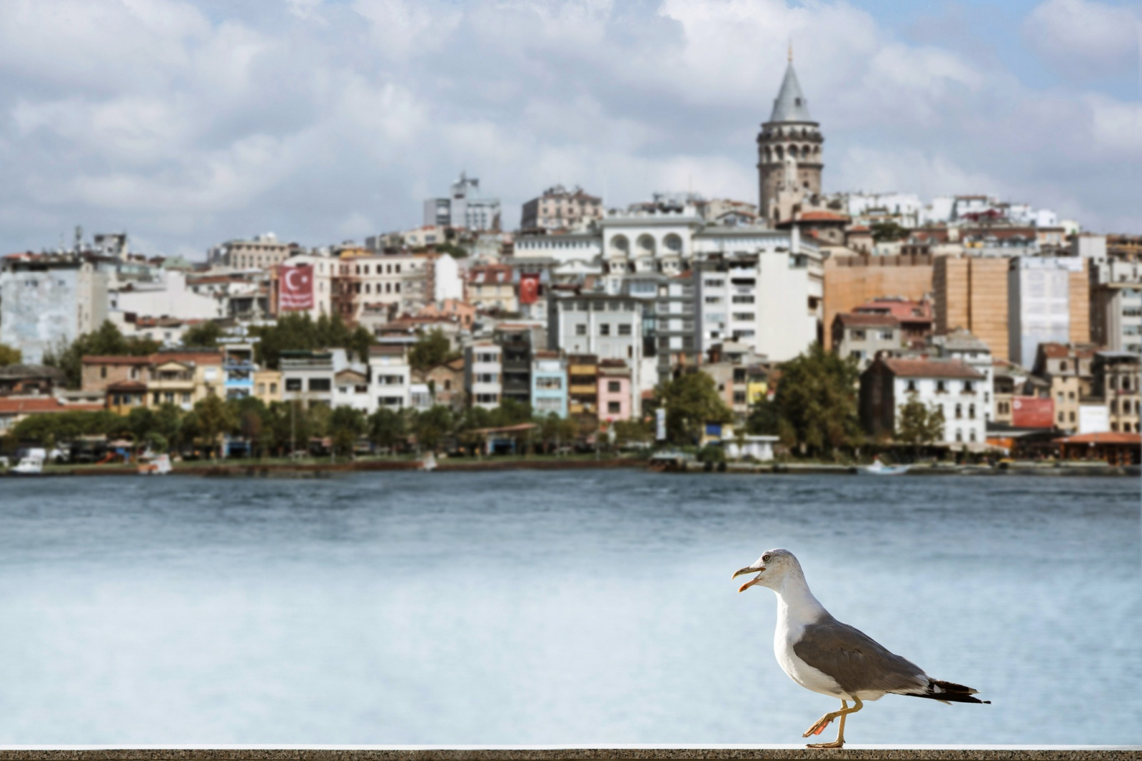 Galata Tower and The Seagull Istanbul