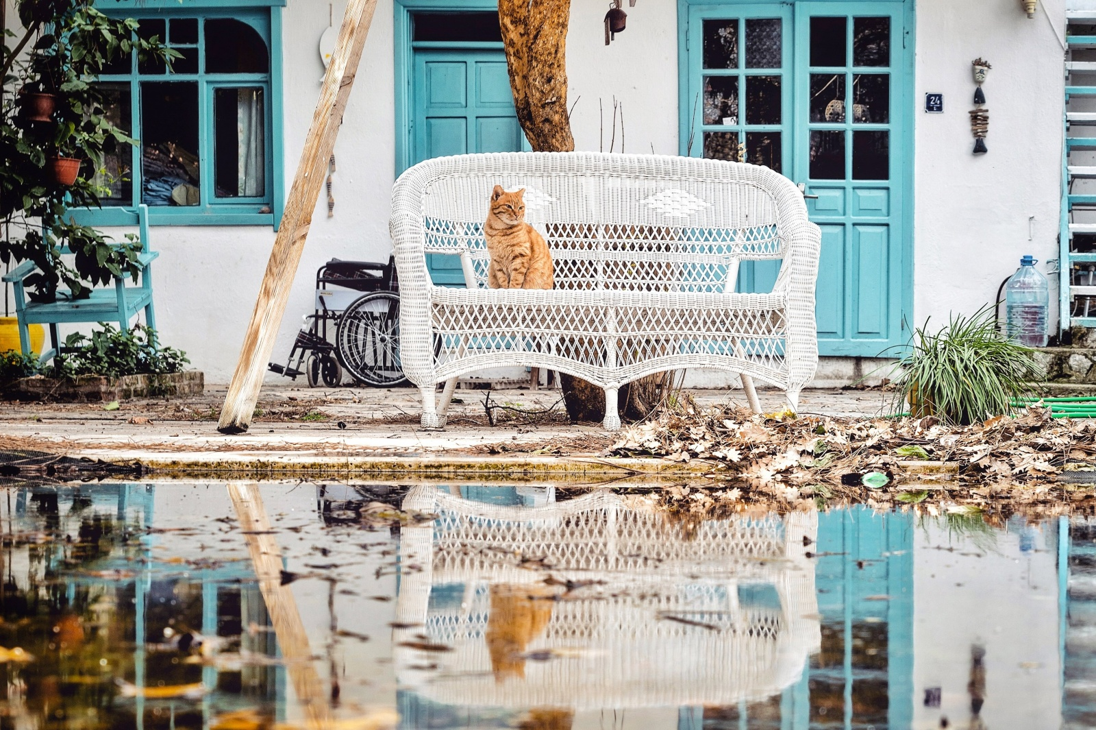 Cat of Selimiye, Turkey