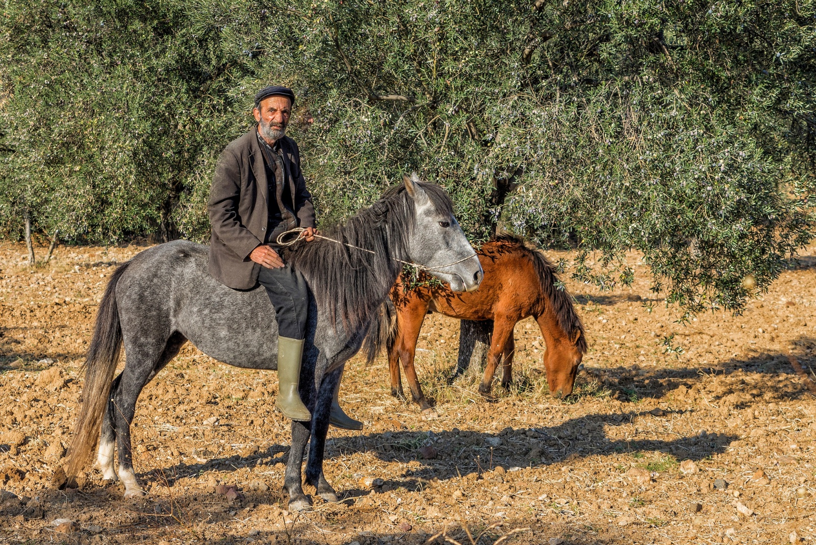 Turkish farmer and his horses