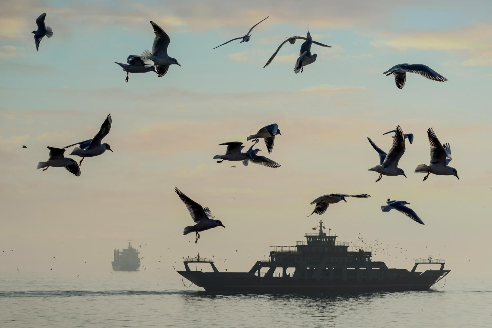 Yalova Ferry and Seagulls