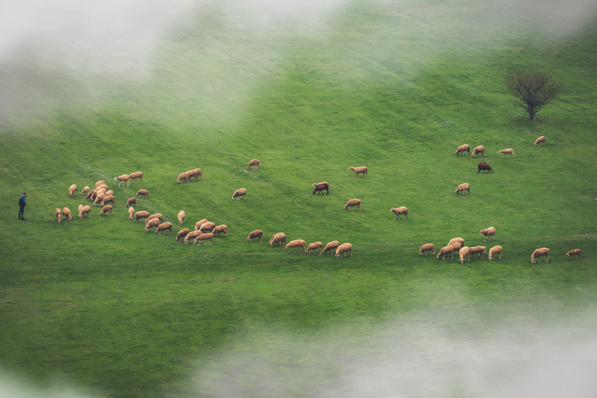 Misty Morning and the herd