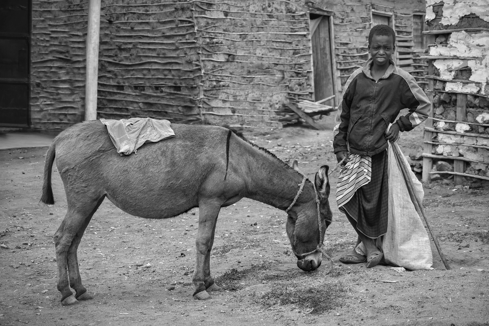 Maasai Kid and The Donkey