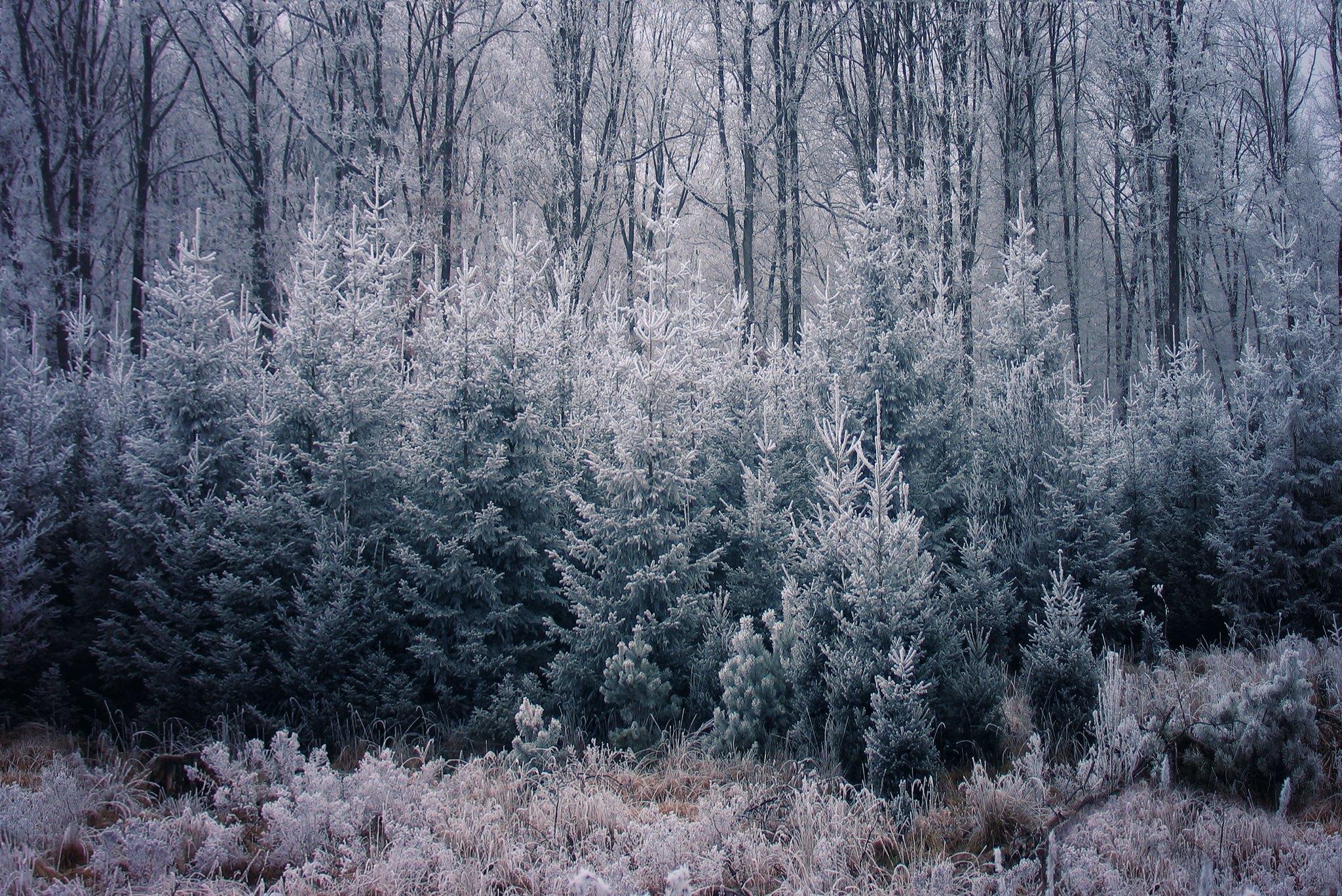 Winter in Grünwald